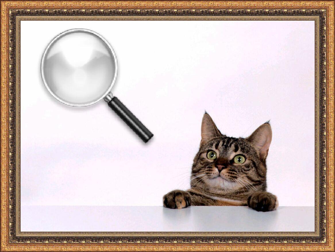 Как устроено кошачье зрение и что оно