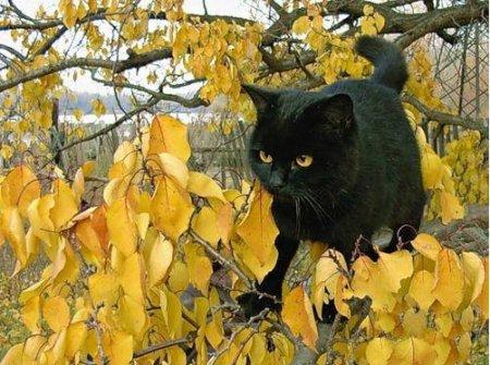 Жил-был кот