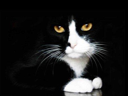 Монолог Черного кота