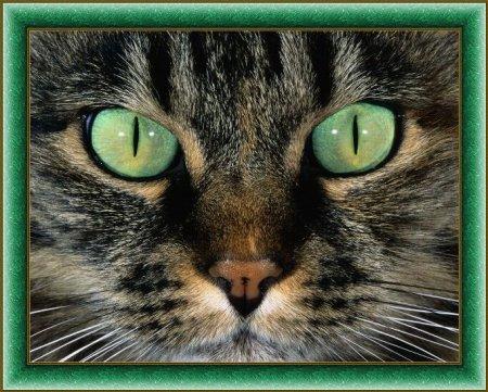 Факты о физиологии кошек