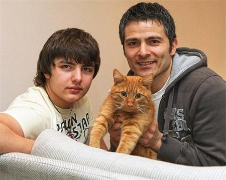 Внешность британских кошек