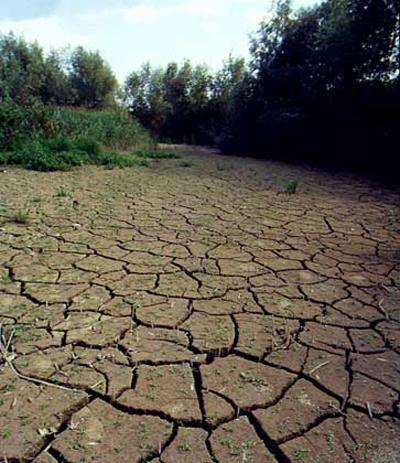 Почвы тундровые глеевые почвы