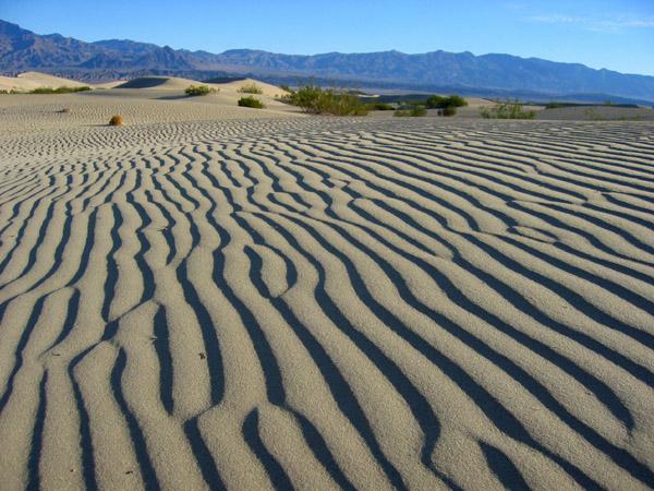 Жизнь в пустынях сосредотачивается в