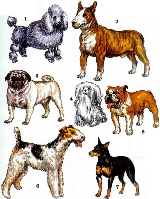 Смесь породы собак в картинках с названиями