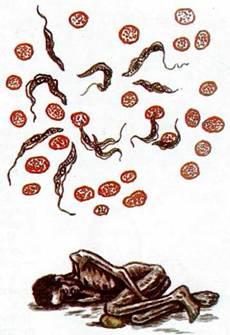 ...в организм комара анофелеса, откуда он при укусе и попал в кровь.