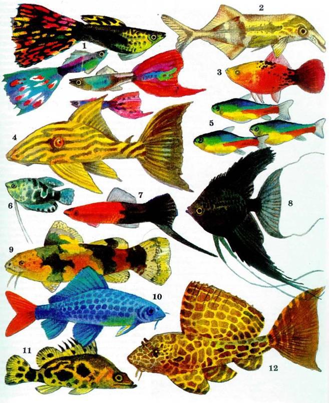Рыбки аквариумные рисунок
