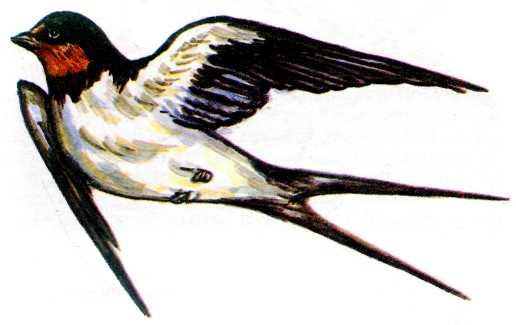 картинки птица ласточка украины.