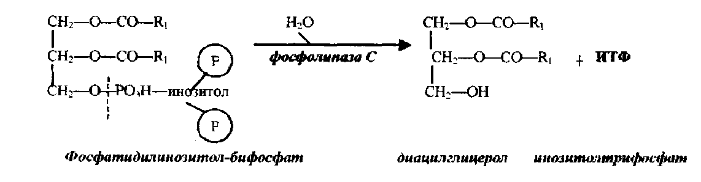 Фосфолипид фото