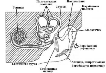 """Нервная система.   """"Орган слуха.  Наука."""